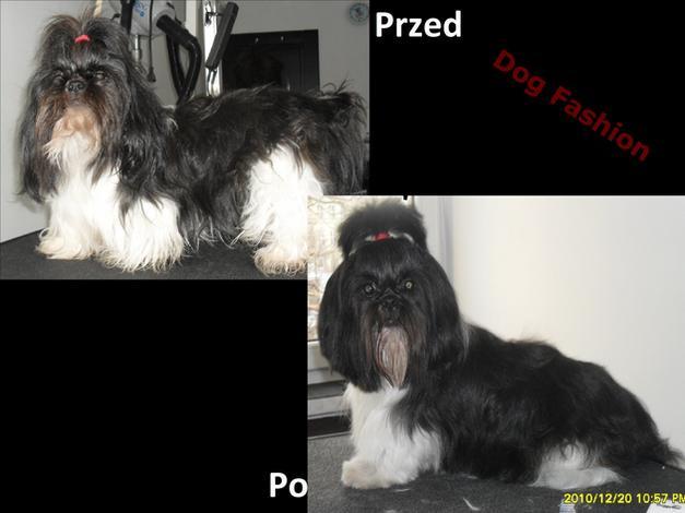 strzyżenie - DOG FASHION Salon Pielęgn... zdjęcie 1