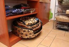 Sklep zoologiczny, pielęgnacja zwierząt