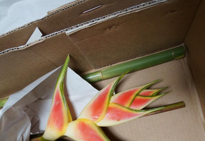 kwiaty kolumbia - Green Team - Import Kwiat... zdjęcie 6