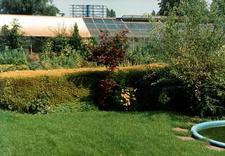 rośliny - Ogrody - Szkółka drzew i ... zdjęcie 6