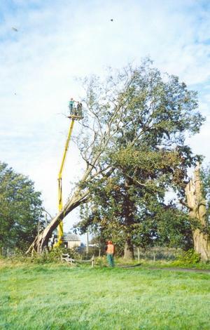 pielęgnacja terenów zielonych - Zakład Kształtowania i Pi... zdjęcie 17