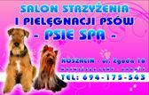 Psie Spa Strzyżenie Psów