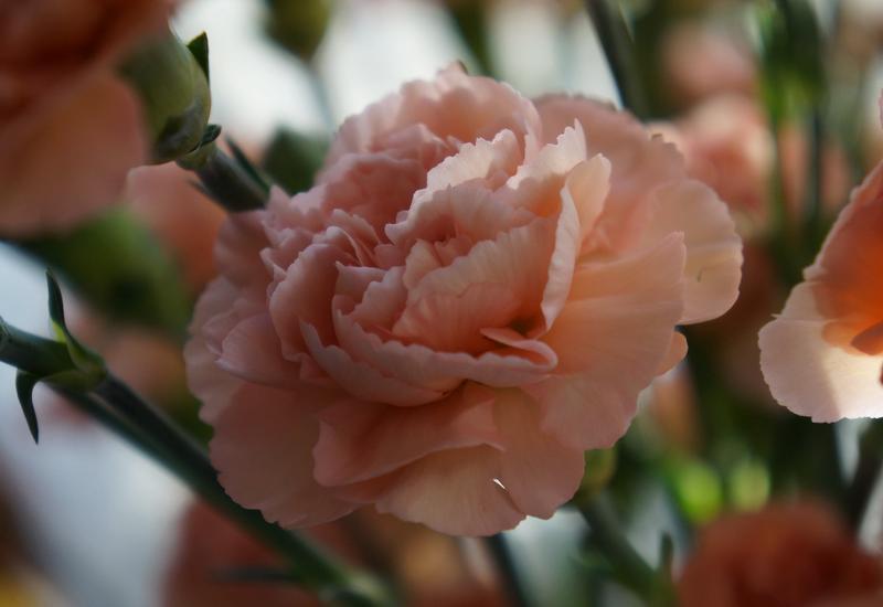 tropiki - Green Team - Import Kwiat... zdjęcie 3