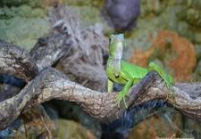 egzotyczne pamiątki - Ecotropicana - urodziny d... zdjęcie 5