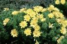 Dendrona Sp. z o.o. Nasiona drzew i krzewów