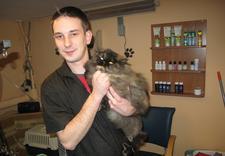 usługi dla zwierząt - PSUBRATEK & SEJUTEK zdjęcie 13