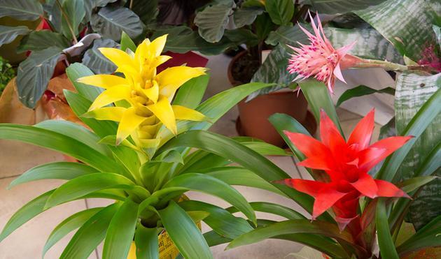 serwis maszyn ogrodniczych - Centrum Ogrodnicze Szarot... zdjęcie 5