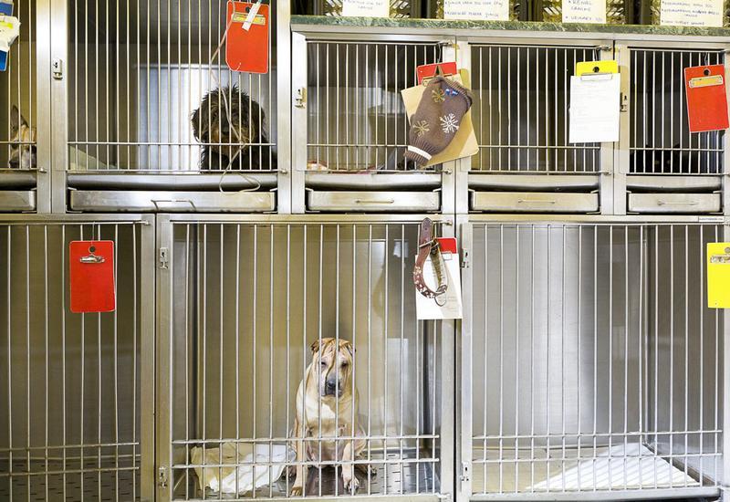 dla zwierząt - Klinika weterynaryjna s.c... zdjęcie 6