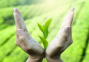 kosmetyki ziołowe, pielęgnacja ciała