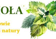herbaty, zioła