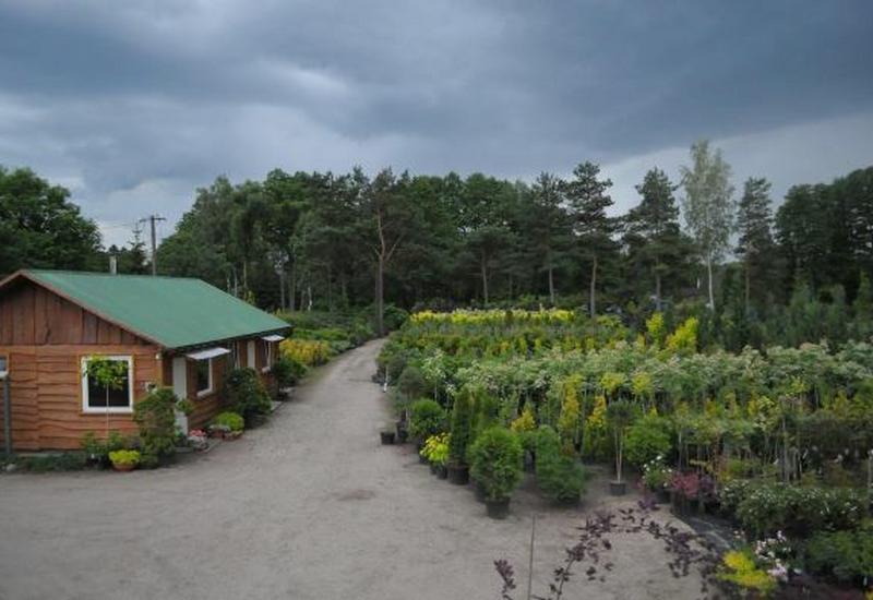 rośliny ozdobne - Gospodarstwo szkółkarskie... zdjęcie 1