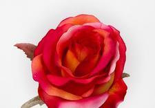 kwiaty sztuczne sklep internetowy - Akces I. J. Ostrowscy Sp.... zdjęcie 17