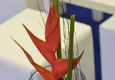 zumioffers - Artemi - Pracownia Florys... zdjęcie 23