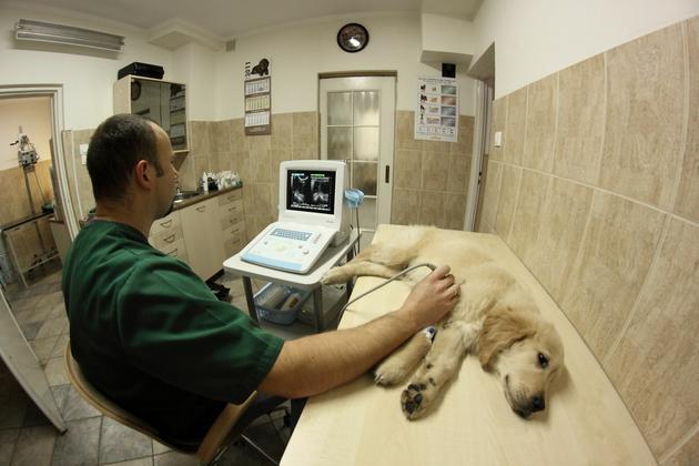 odrobaczanie - Klinika Weterynaryjna Kor... zdjęcie 8