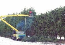 pielęgnacja ogrodów - Zakład Kształtowania i Pi... zdjęcie 16