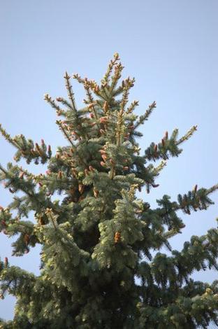 drzew - Gospodarstwo Szkółkarskie... zdjęcie 5