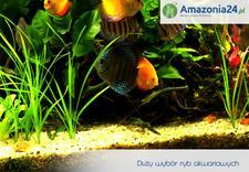 podłoża - Amazonia24.pl zdjęcie 2