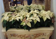 wiązanki kwiatowe - Studio Florystyczne Iwona... zdjęcie 2
