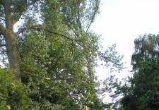 czyszczenie rynien - Quercus Tomasz Sysło. Wyc... zdjęcie 4