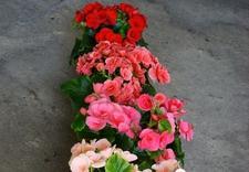 nawozy do rododendronów - Gospodarstwo Ogrodnicze I... zdjęcie 4