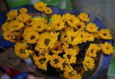 egzotyki - Green Team - Import Kwiat... zdjęcie 10