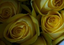 kwiaty cięte - Green Team - Import Kwiat... zdjęcie 4