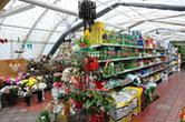 Daglezja. Centrum Ogrodnicze, Kwiaciarnia, Meble Ogrodowe