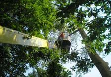 czyszczenie ciśnieniowe elewacji - Quercus Tomasz Sysło. Wyc... zdjęcie 1