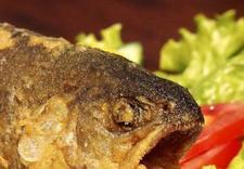Świeże ryby bałtyckie, filet z dorsza, flądra, turbot, sandacz, łosoś