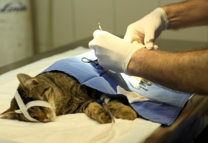 odrobaczanie zwierząt - Klinika Weterynaryjna Kor... zdjęcie 3