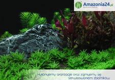 kamienie - Amazonia24.pl zdjęcie 1