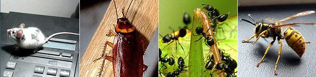 dezynfekcja - Insekt FUH zdjęcie 1