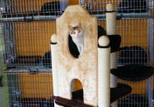 zakwaterowanie kotów - Hotel Na kocią Łapę-Hotel... zdjęcie 1