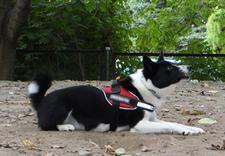 szkolenie psów, ośrodek szkolenia psów