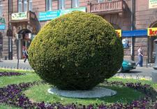 usługi ogrodnicze - OGRÓD-SYSTEM. Zakład Kons... zdjęcie 1