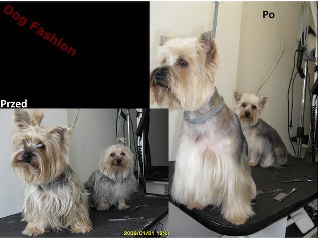 pielęgnacja kota - DOG FASHION Salon Pielęgn... zdjęcie 5