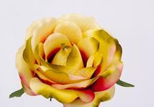 róże sztuczne - Akces I. J. Ostrowscy Sp.... zdjęcie 22