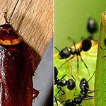 Dezynsekcja, deratyzacja, zwalczanie komarów