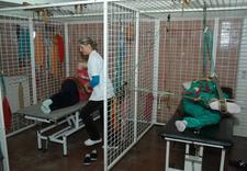 rehabilitacja ortopedyczna - Śląskie Centrum Rehabilit... zdjęcie 4