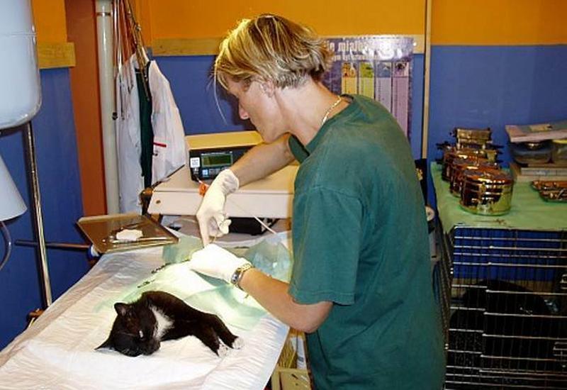 Weterynarz, lecznica zwierząt