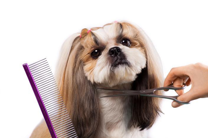 Opinie Karusekcompl Sklep Zoologiczny Salon Piękności Psów Psi