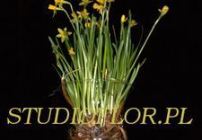 na telefon - Tajemniczy Ogród - kwiaci... zdjęcie 6
