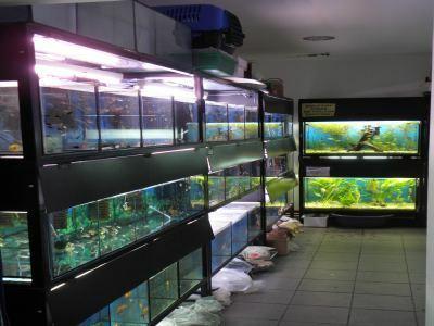 akwaria - Adamiak-Zoo Sklep zoo węd... zdjęcie 3
