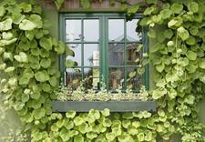 stolarka okienna - Wójcik Okna i Drzwi Drewn... zdjęcie 9