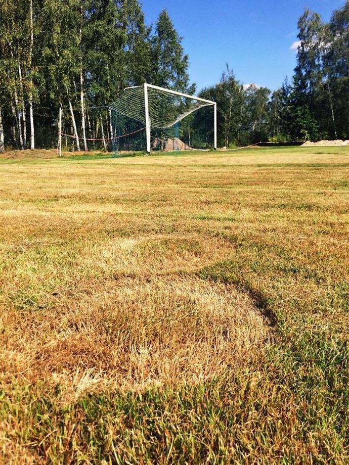 Kręgi w zbożu na piłkarskim boisku? W Radziwiłłowie miłośnicy