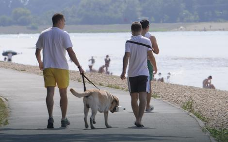 Šetanje pasa striktno definisano pravilnikom