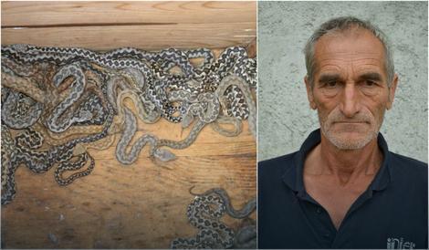 Drago Lečić, poznati hercegovački zmijolovac druguje sa otrovnicama