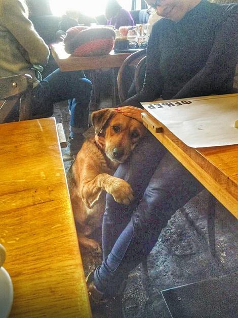 Promrzli kerić zahvalno se ušuškao u naručje gošće kafića