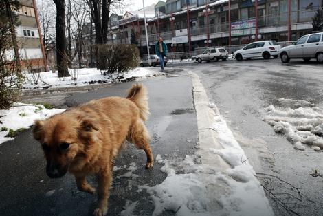 Sit pas ima mnogo veće šanse da preživi ekstremno niske temperature