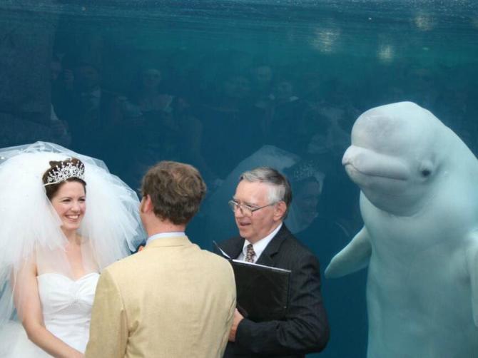 Hteli su neobično venčanje, a sada im se mnogi smeju: Za sve je kriv OVAJ nezvani gost!